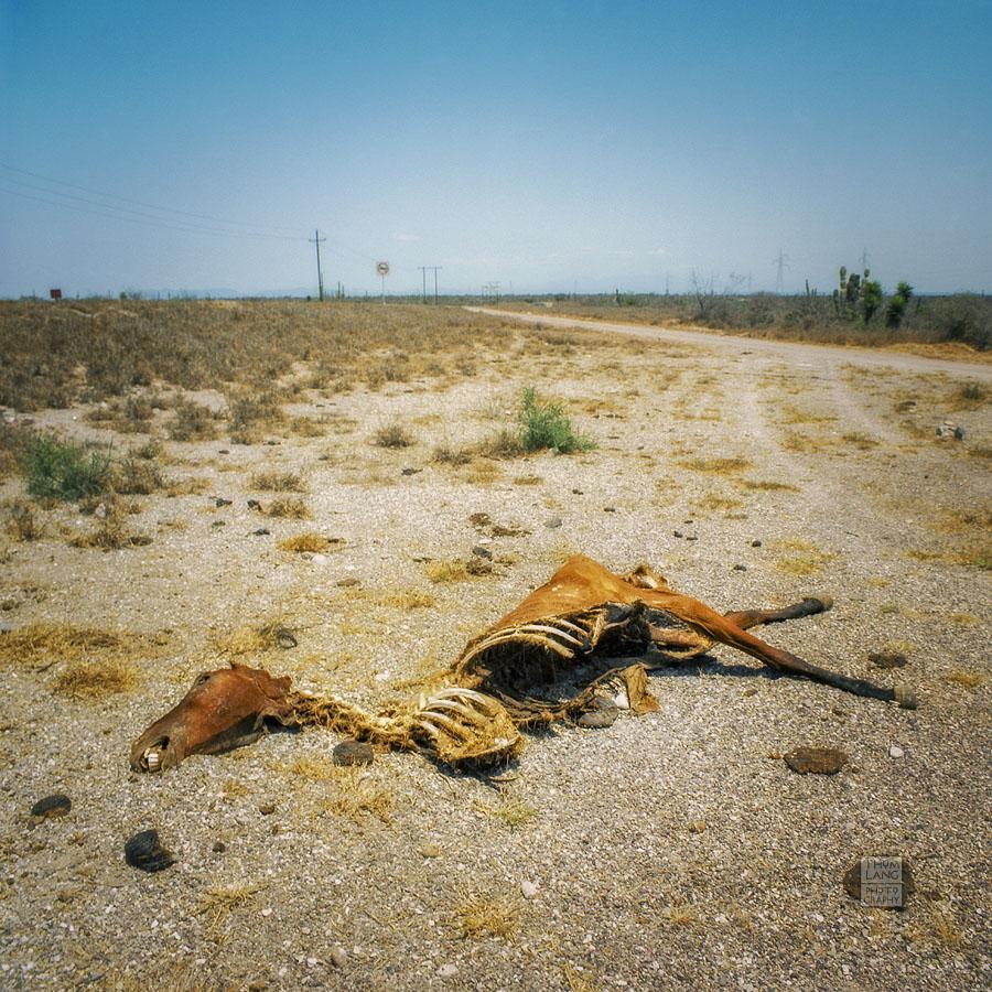 Baja_Dead_Horse_1992_07-E copy