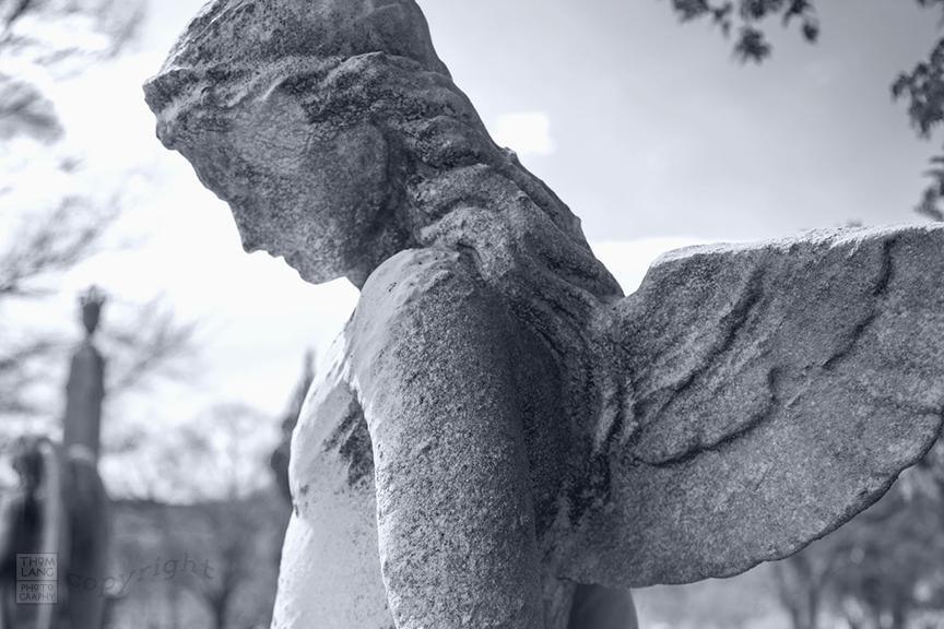 Sleepy Hollow Cemetery_2009_0391-BW-WM