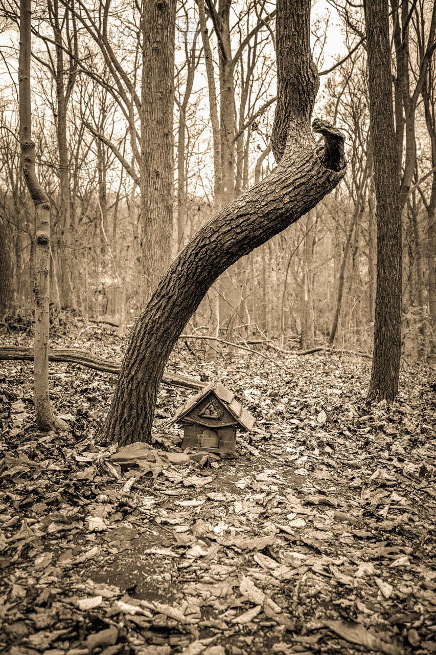 Fairy_House_5292-B