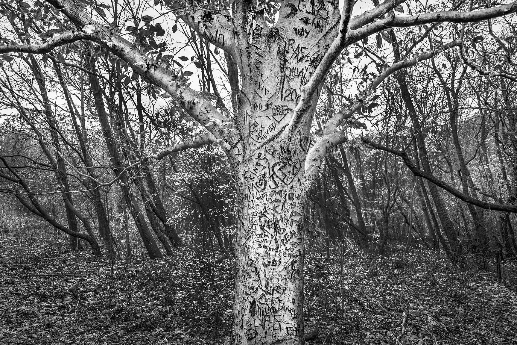 03_Tattoo Tree_5329-BLOG