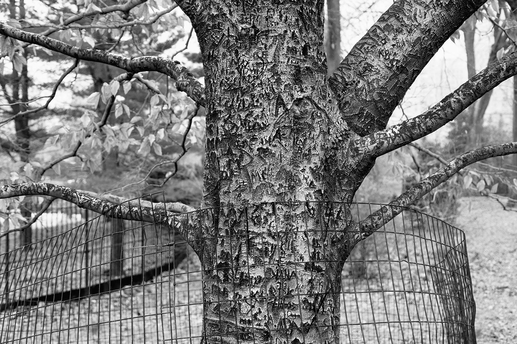 04_Tattoo Tree_6205-BLOG