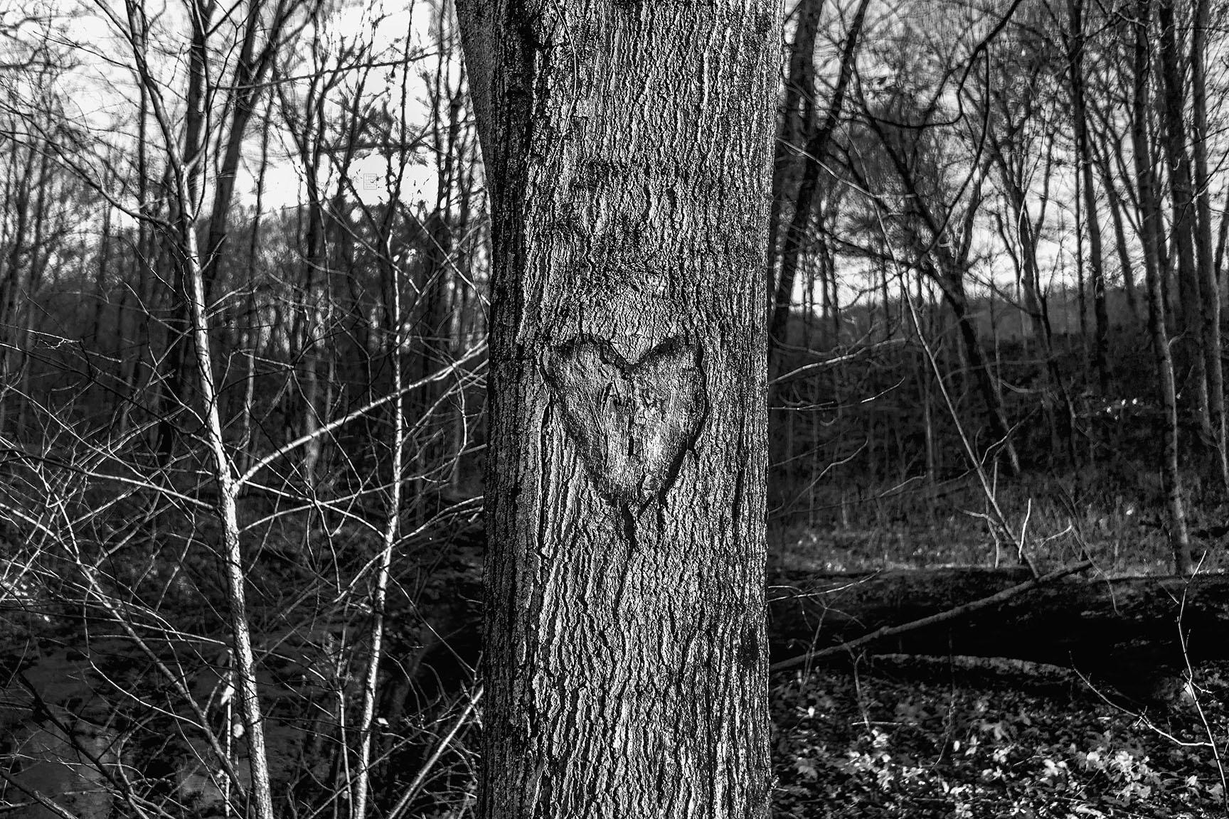 05_Tattoo Tree_5126-BLOG