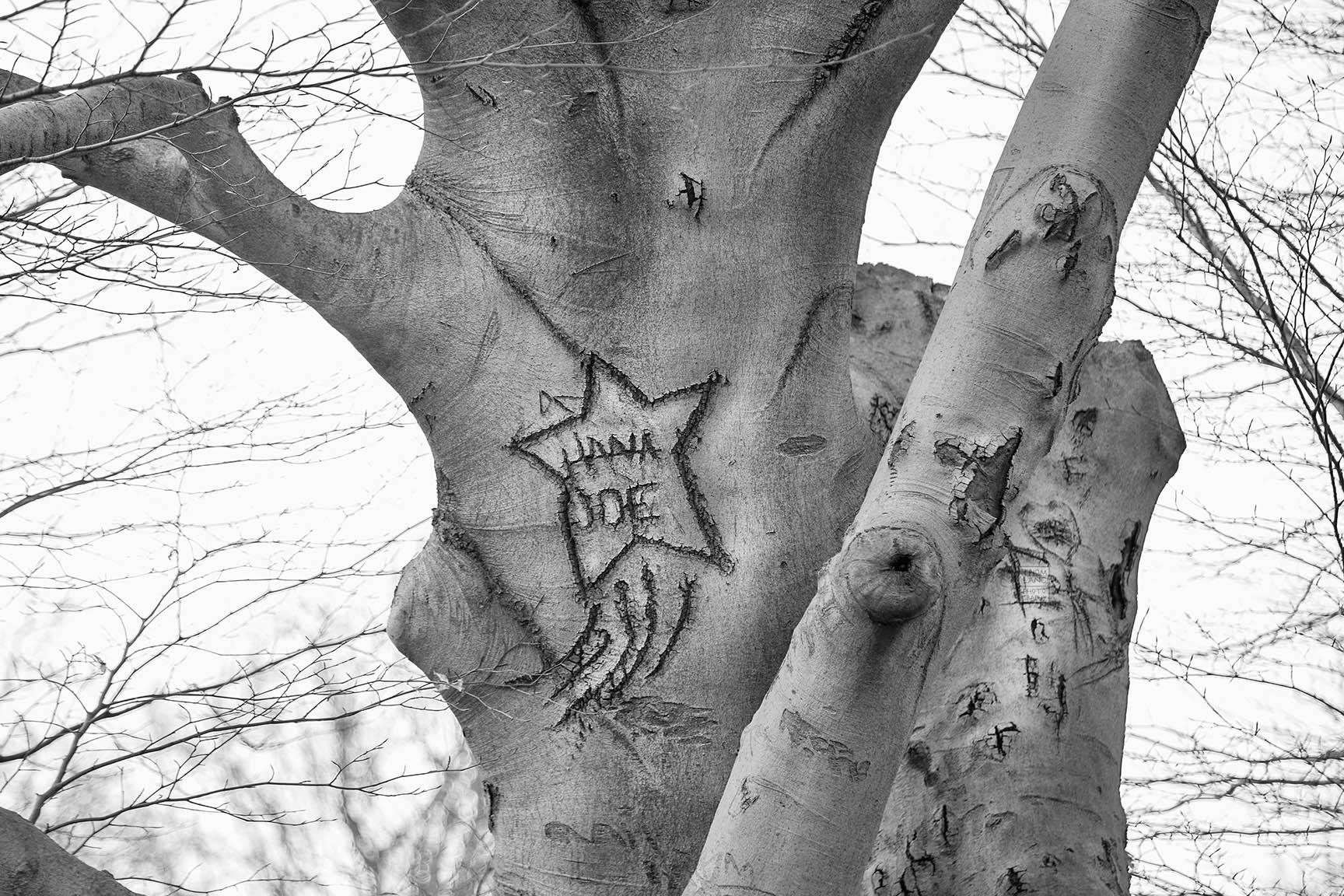 06_Tattoo Tree_7756-BLOG