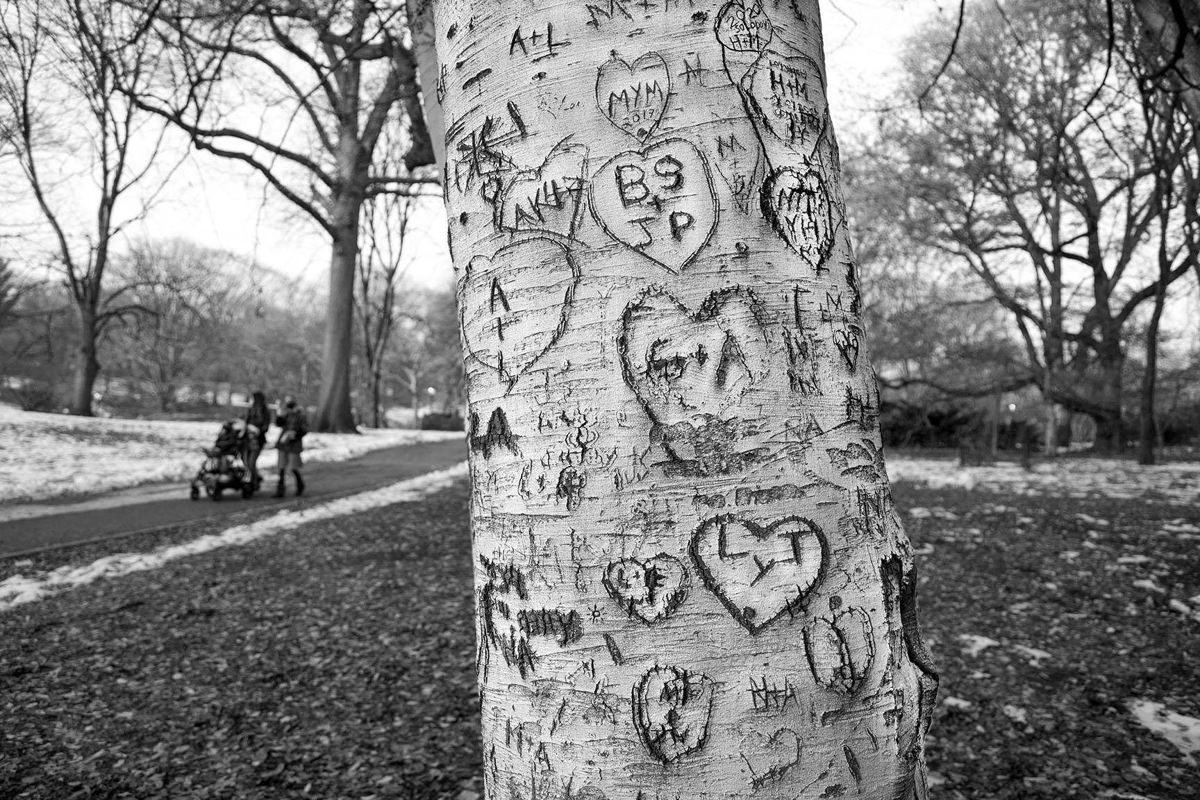 08_Tattoo Tree_7049-BLOG