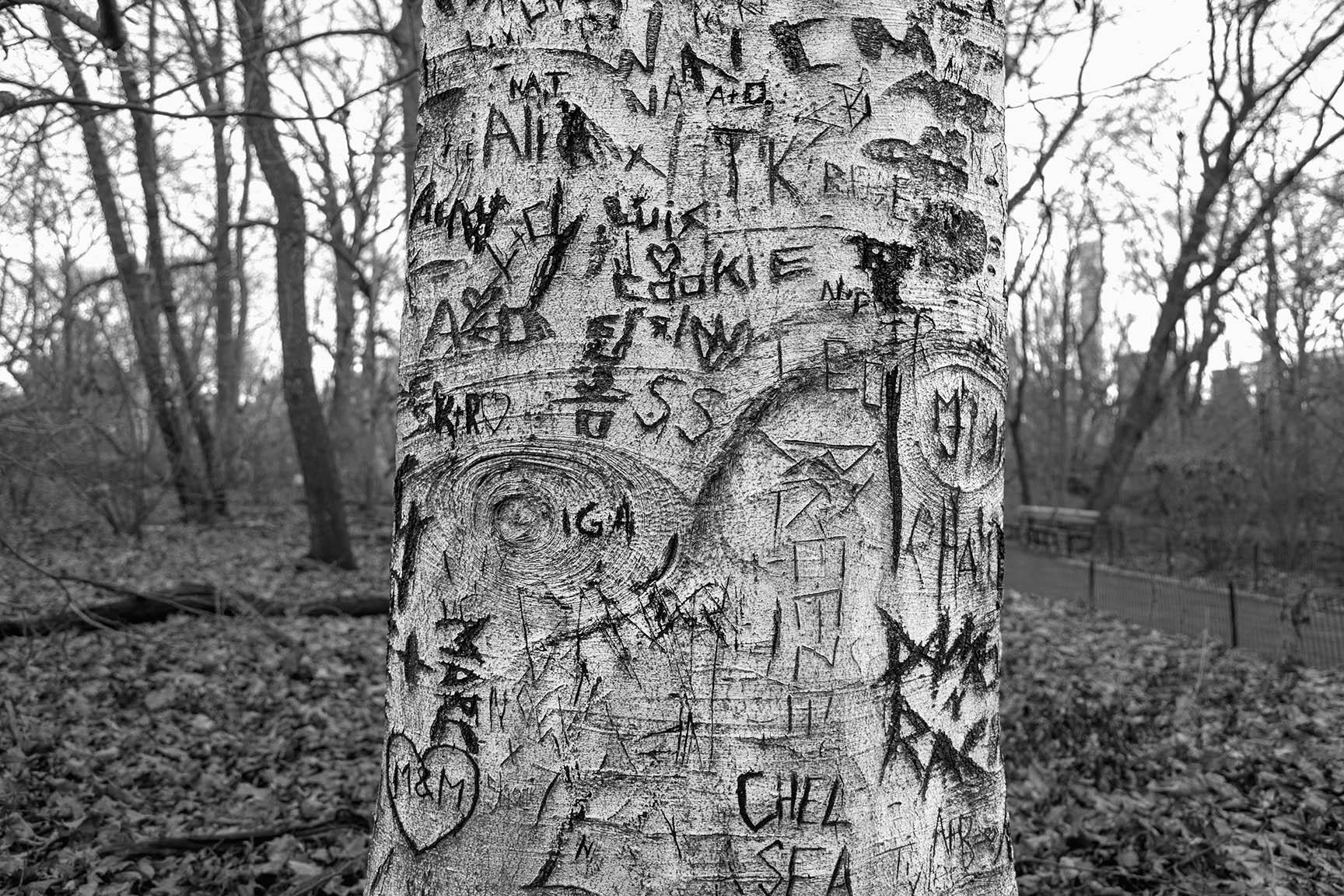 10_Tattoo Tree_7270-BLOG