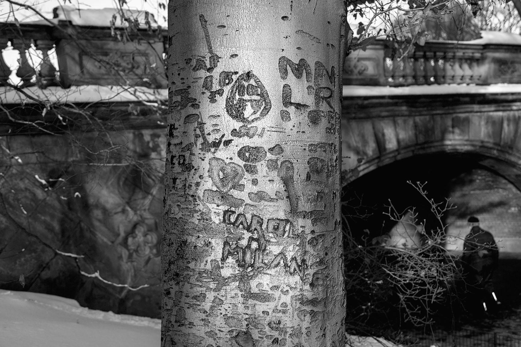 11_Tattoo Tree_6722-BLOG