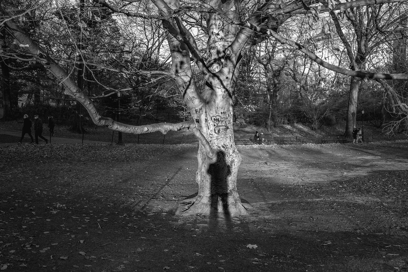 12_Tattoo Tree_6120-BLOG