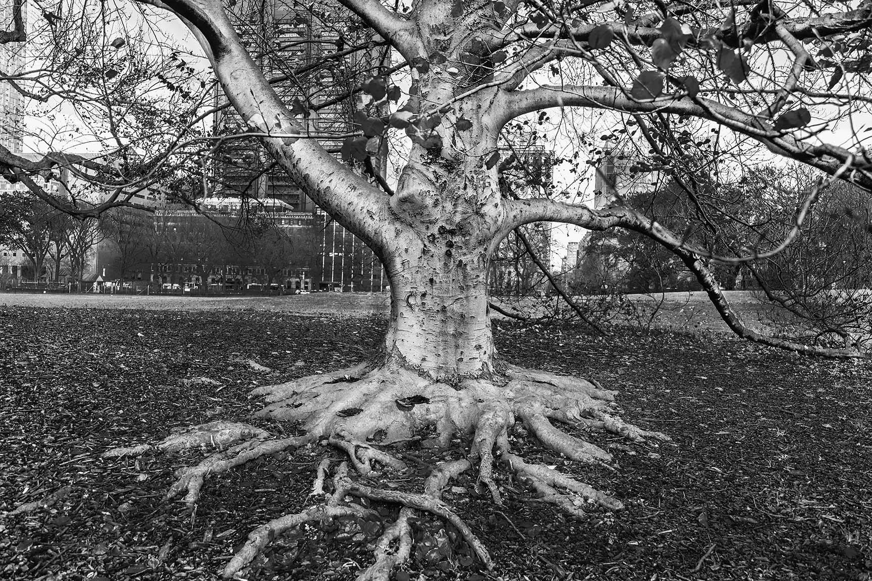 13_Tattoo Tree_5882-BLOG