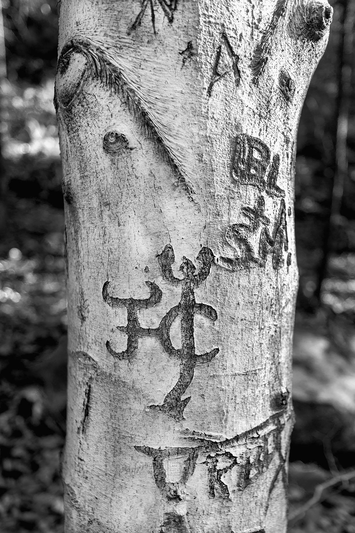 15_Tattoo Tree_5116-BLOG
