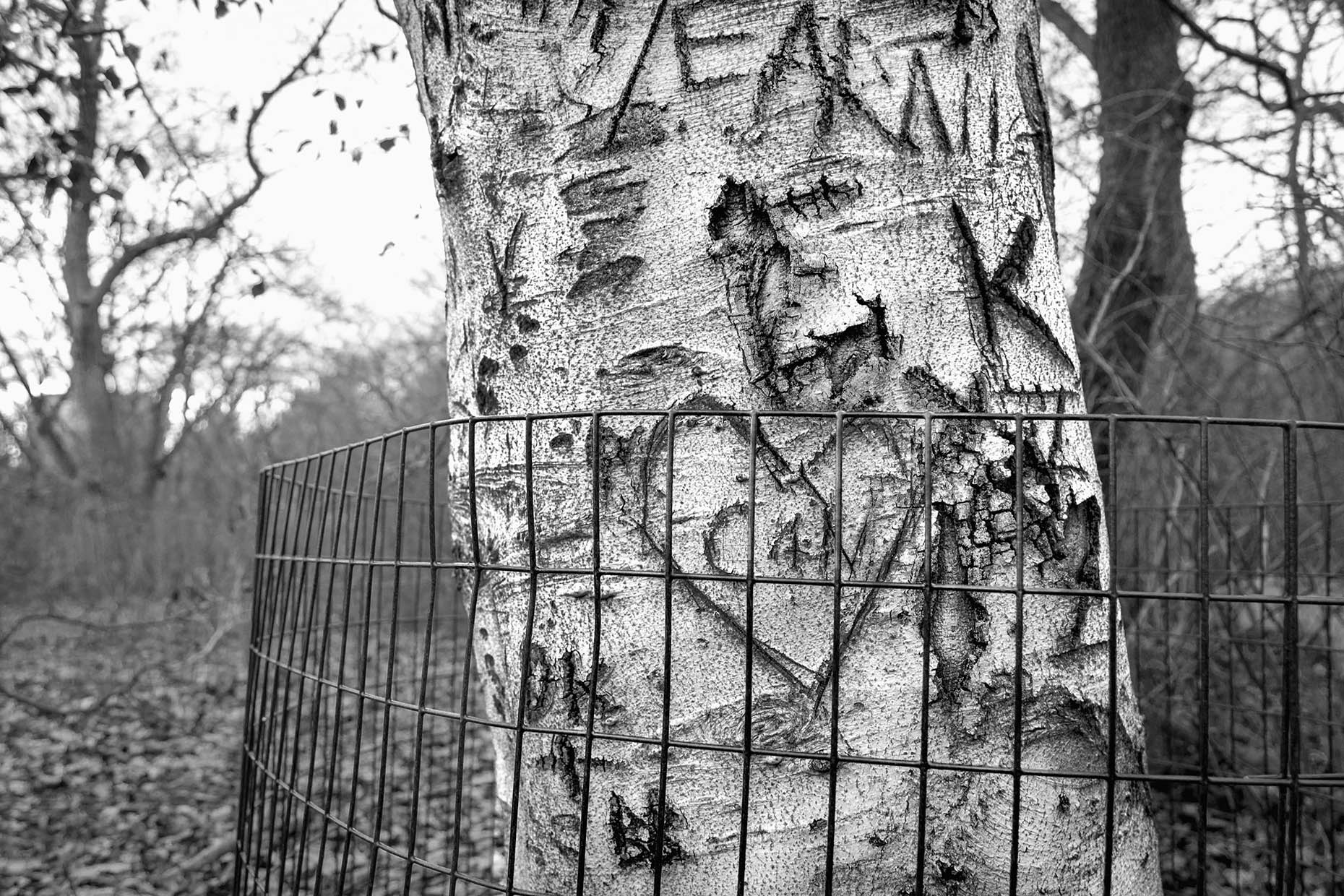 16_Tattoo Tree_7236-BLOG