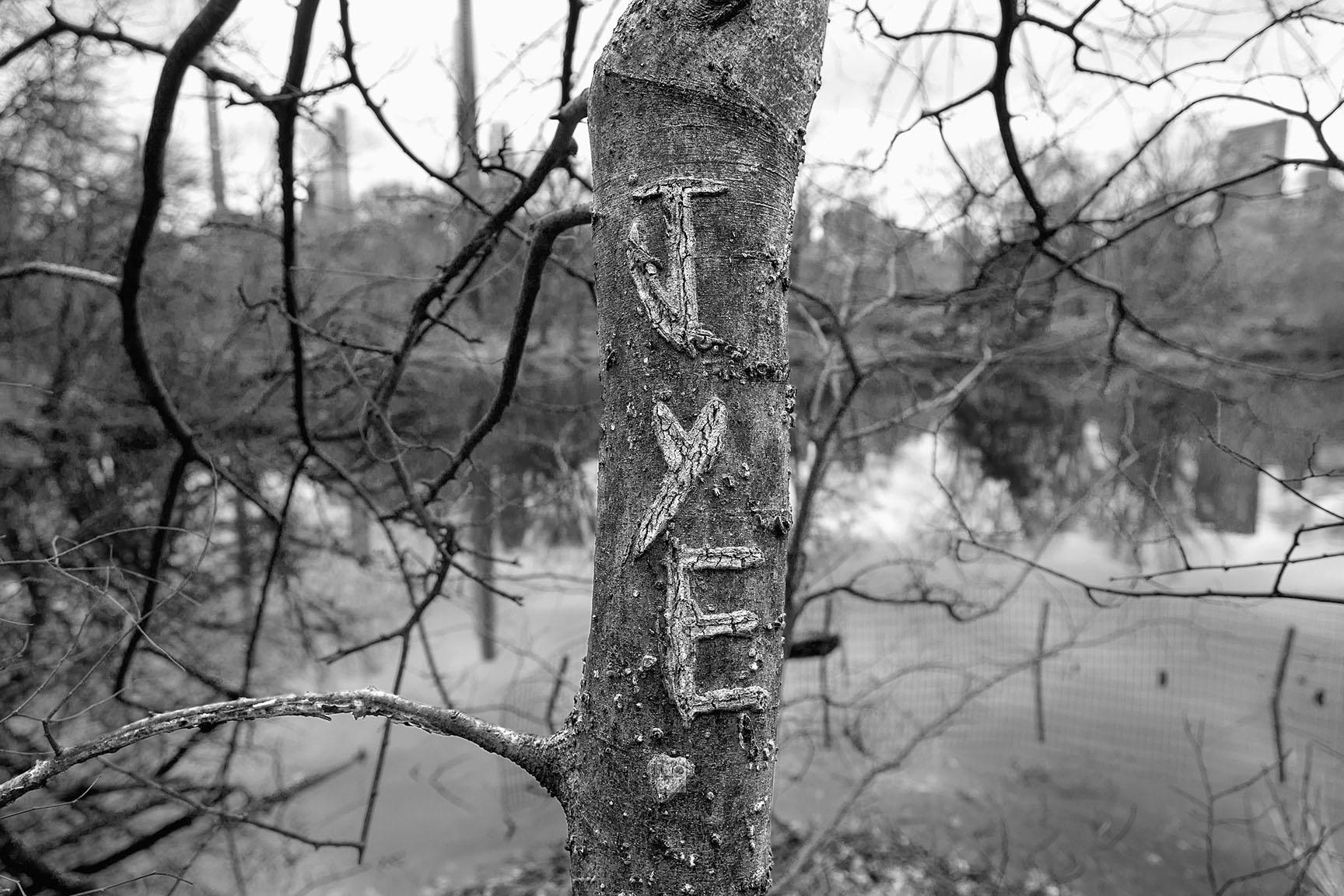 20_Tattoo Tree_7413-BLOG