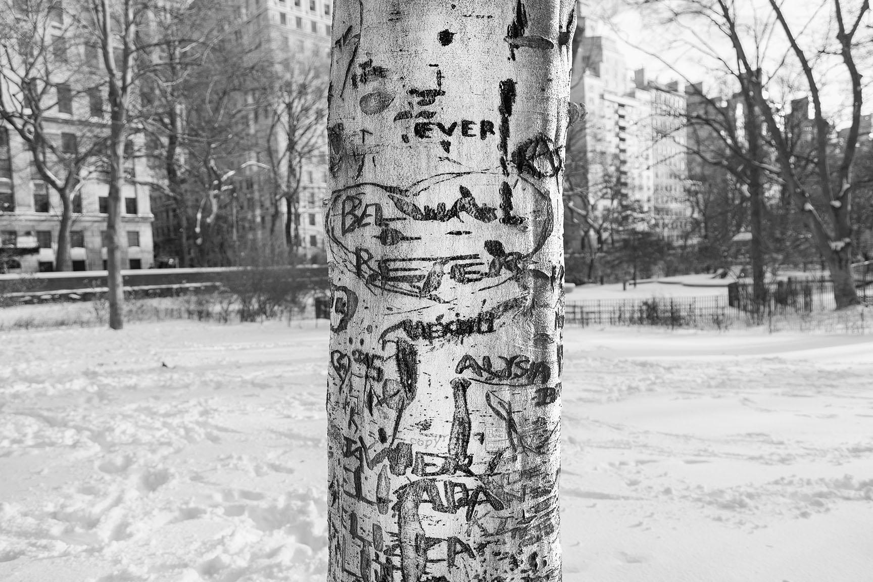 23_Tattoo Tree_6684-BLOG
