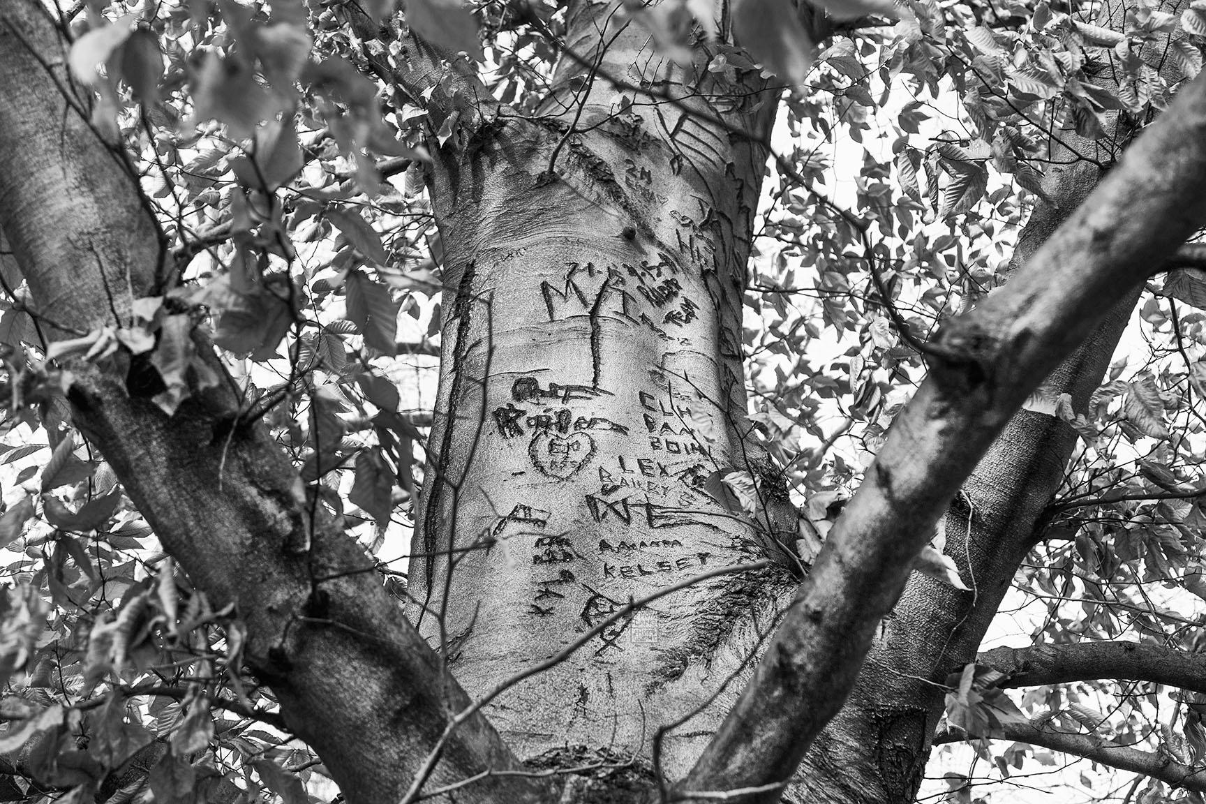 24_Tattoo Tree_6993-BLOG