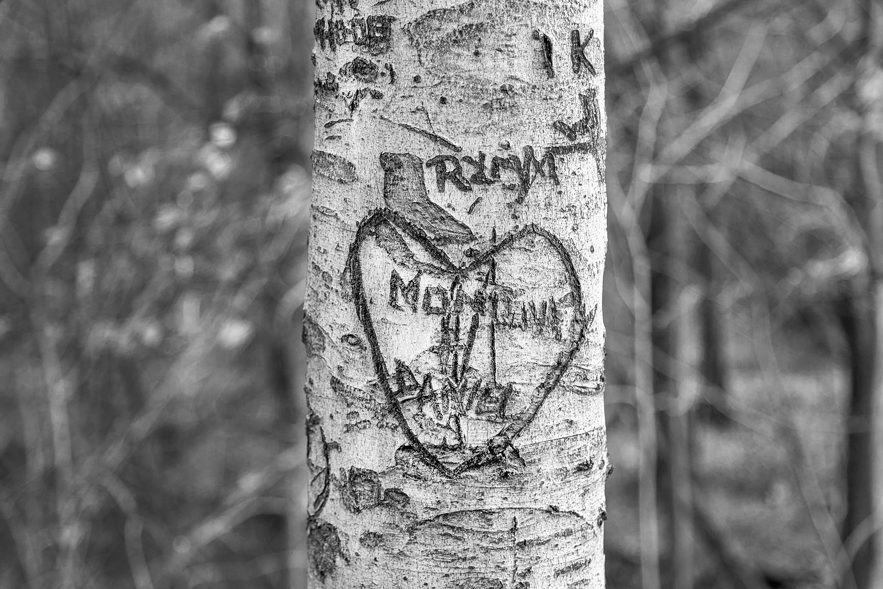 25_Tattoo Tree_5900-BLOG