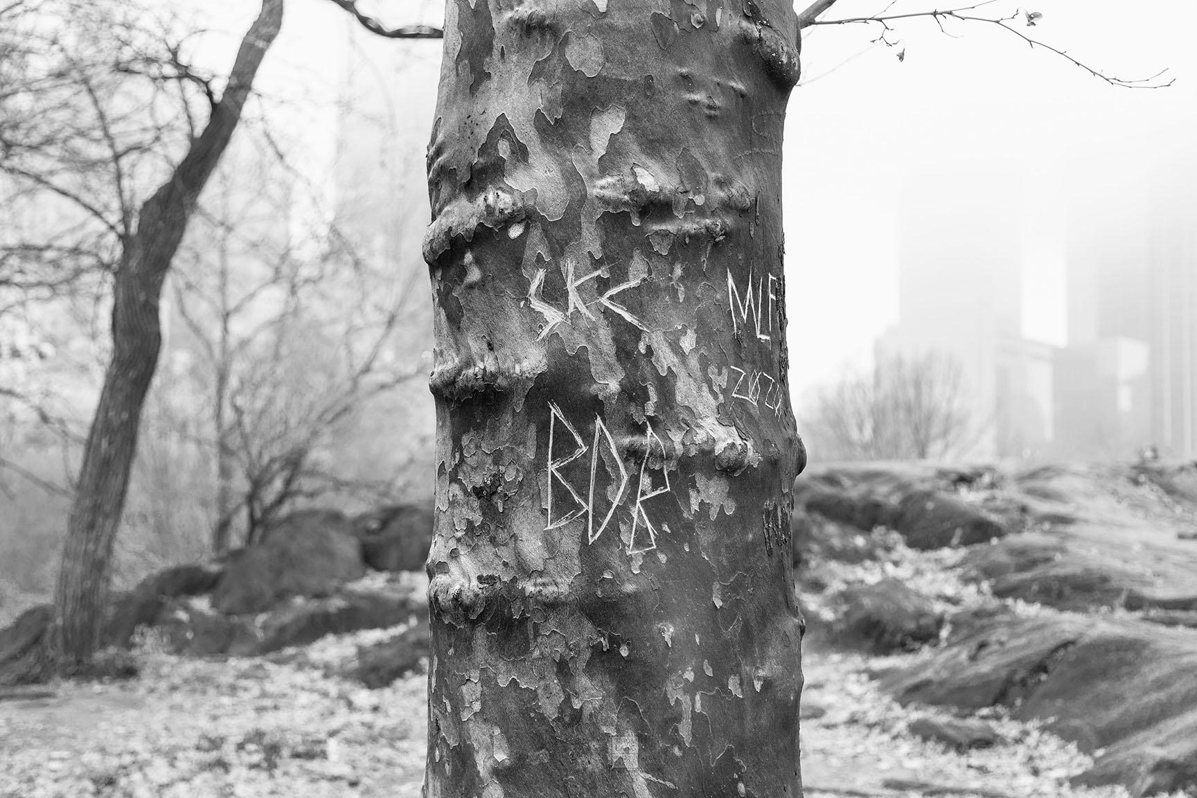 27_Tattoo Tree_6233-BLOG