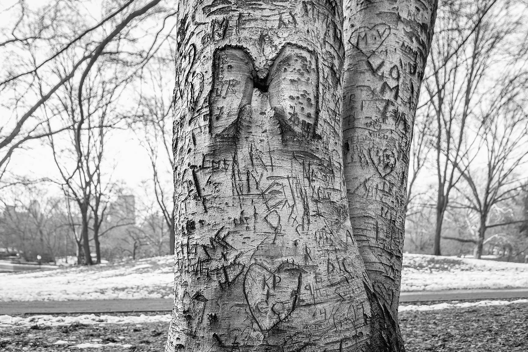28_Tattoo Tree_7045-BLOG