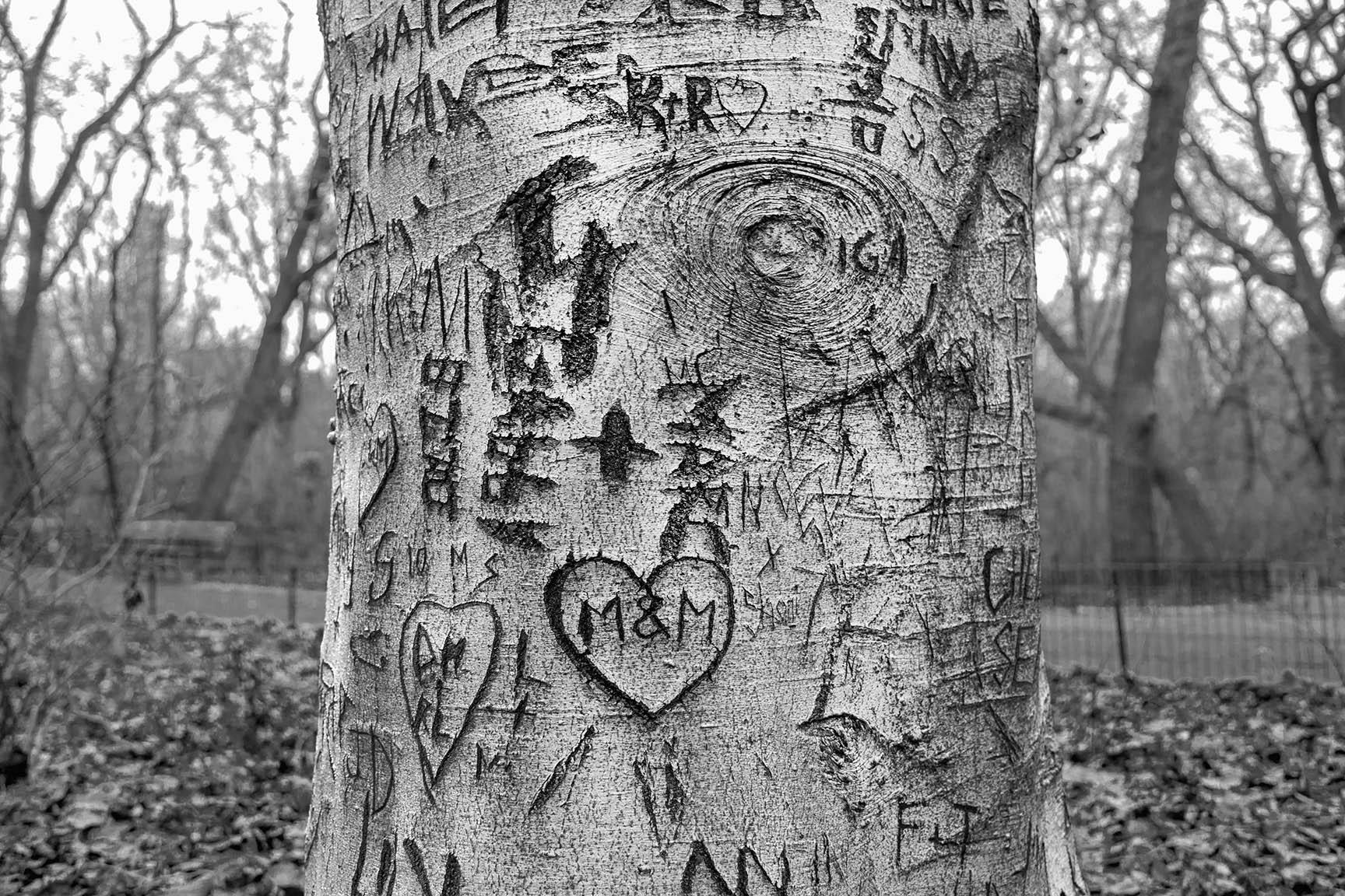 31_Tattoo Tree_7199-BLOG