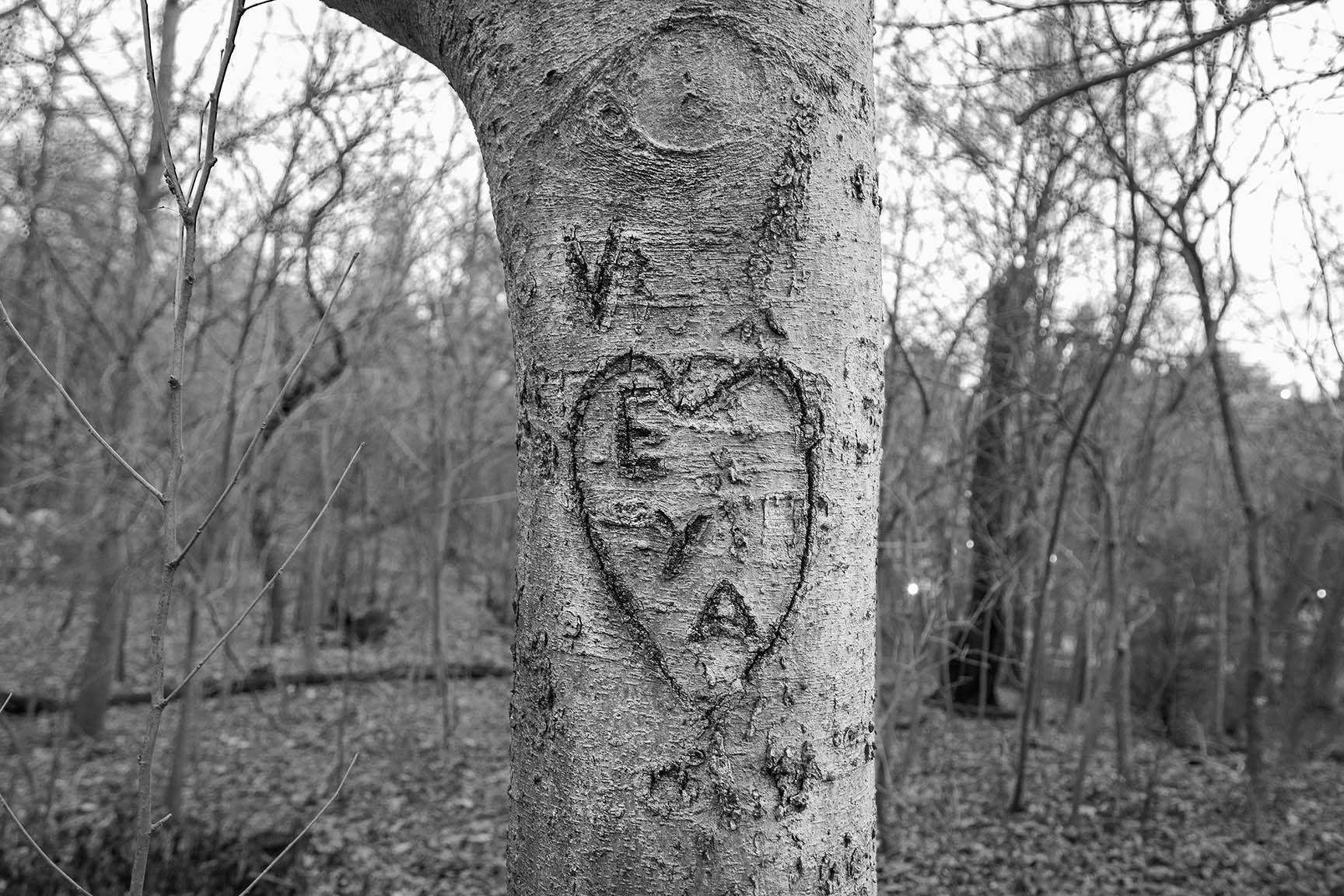 35_Tattoo Tree_7317-BLOG