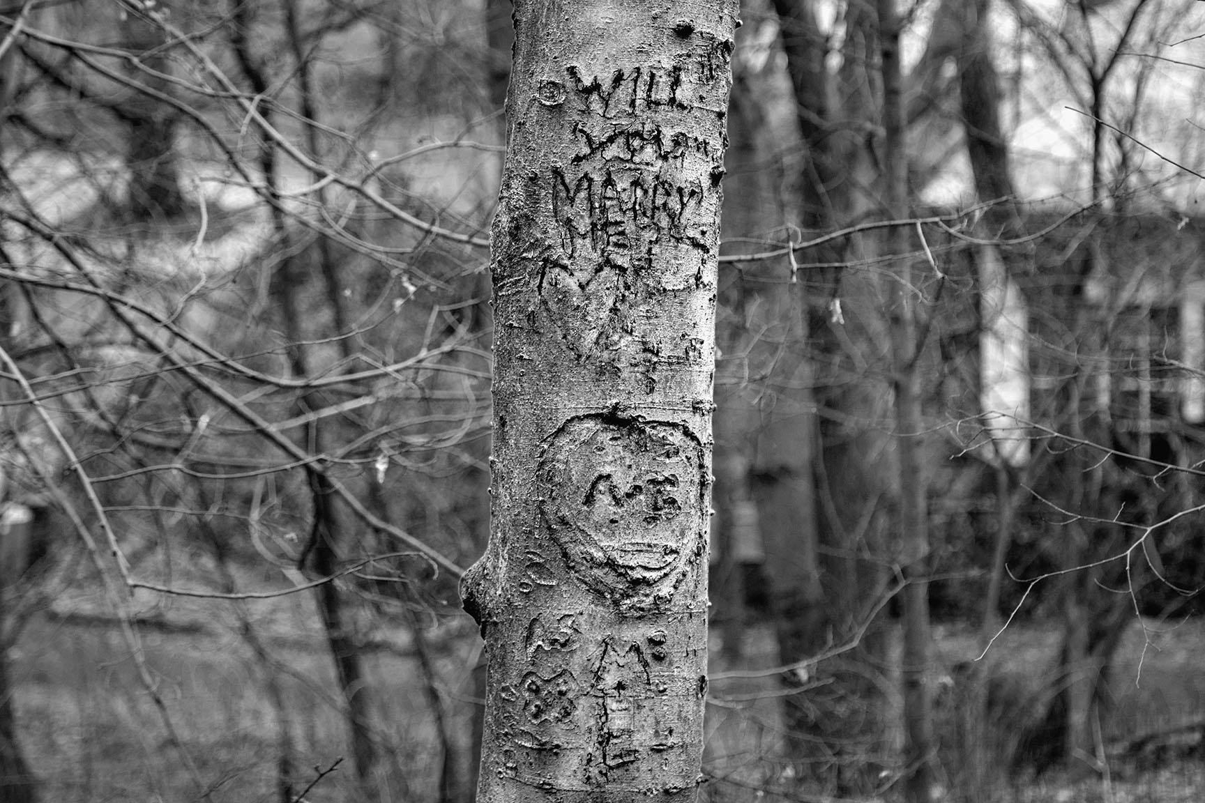 37_Tattoo Tree_7394-BLOG