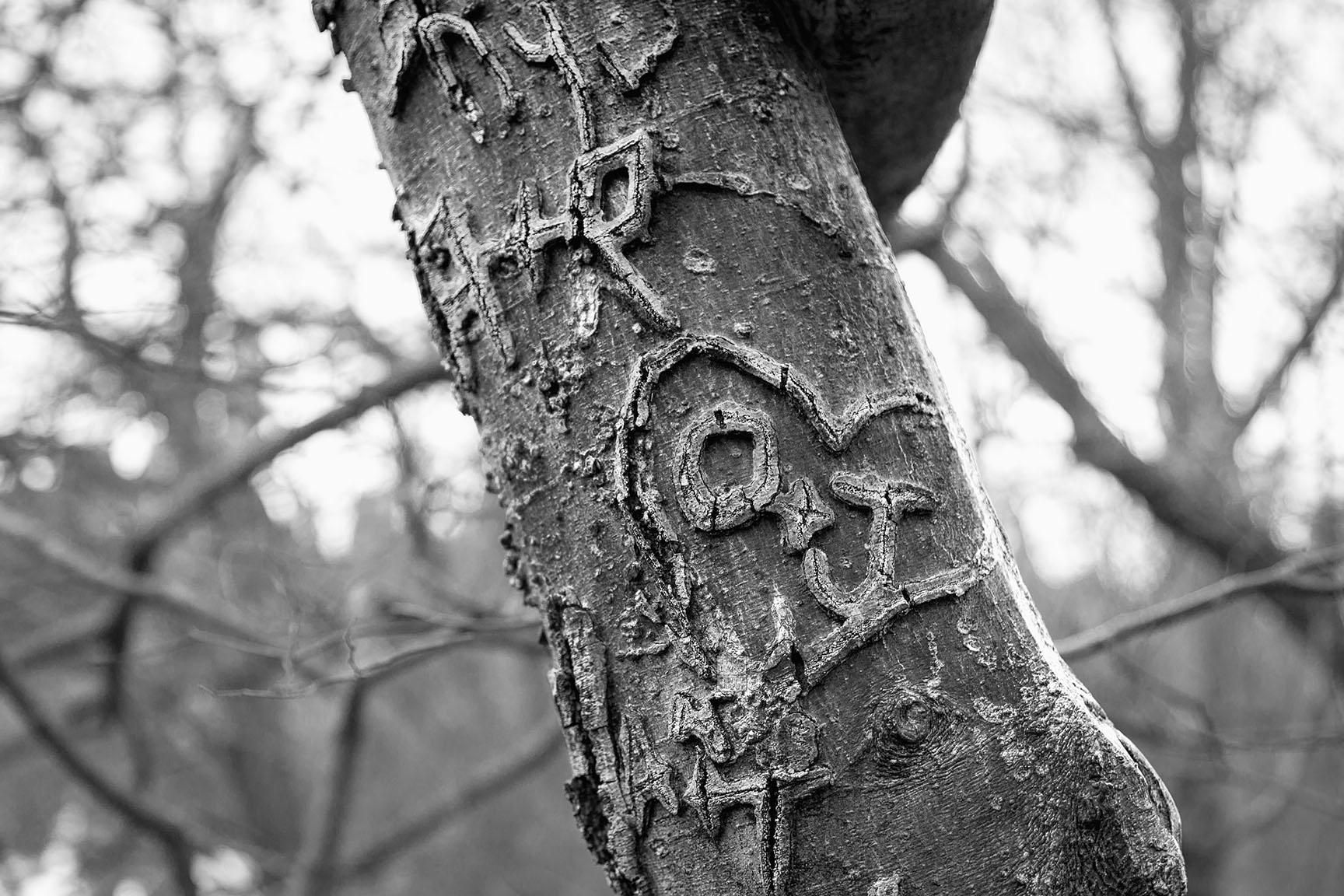 39_Tattoo Tree_7464-BLOG
