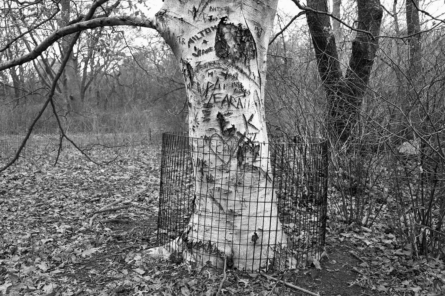 40_Tattoo Tree_7502-BLOG